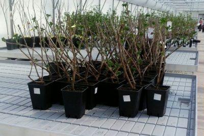 Saveti za kupovinu voćnih sadnica i prolećnu sadnju