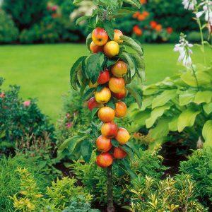 Stubasto voće