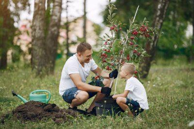 JESENJA SADNJA VOĆAKA: Razmak sadnje za svaku voćnu kulturu
